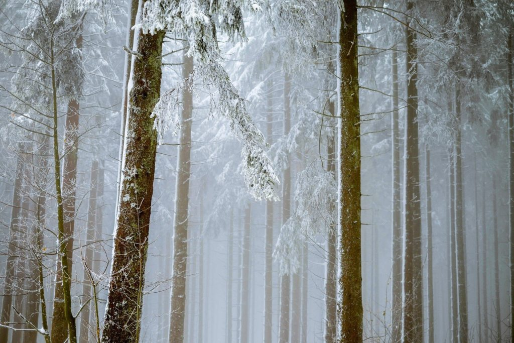 wald-Winter