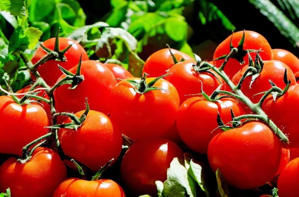 rote-tomaten
